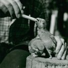 parrot eating food. - 8x10 photo