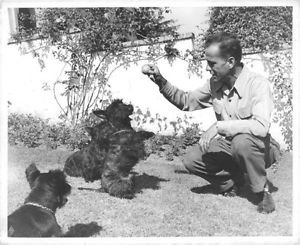 Humphrey Bogart playing with dogs. - 8x10 photo