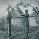 Tribal women plucking leaves. - 8x10 photo