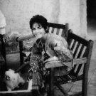 Elizabeth Taylor sitting on chair. - 8x10 photo