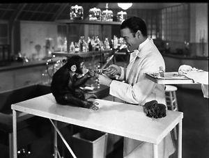 animal testing - 8x10 photo
