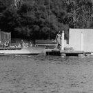 Brigitte Bardot in swim wear. - 8x10 photo