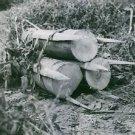 Pieces of wood and stakes tied together. Vietnam, 1964. - 8x10 photo