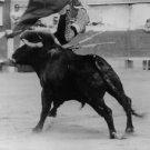 Bull threw El Cordobes in air.  - 8x10 photo