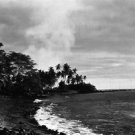 tropical paradise - 8x10 photo