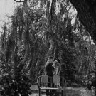 Man and woman are about to kiss underneath tree.  people, man, woman, garden,
