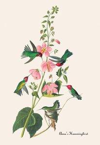 Annas Hummingbird - Paper Poster (18.75 X 28.5)