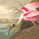 Roseate Spoonbill - 16x24 Giclee Fine Art Print