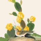 Vesper Sparrow - 16x24 Giclee Fine Art Print Framed In Black (20x30 Finished)