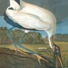 Wood Stork - 16x24 Giclee Fine Art Print Framed In Black (20x30 Finished)