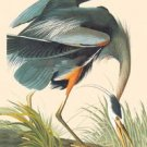 Great Blue Heron - 16x24 Giclee Fine Art Print Framed In Gold (20x30 Finished)