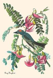 Gray Kingbird - Paper Poster (18.75 X 28.5)
