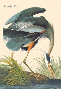 Great Blue Heron - 12x18 Framed Print In Black Frame (17x23 Finished)