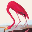 Flamingo - 16x24 Giclee Fine Art Print Framed In Black (20x30 Finished)