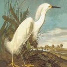 Snowy Egret - 12x18 Gallery Wrapped Canvas Print