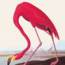 Flamingo - 16x24 Giclee Fine Art Print Framed In Gold (20x30 Finished)