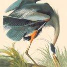 Great Blue Heron - 16x24 Giclee Fine Art Print