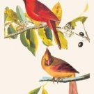 Cardinal - 16x24 Giclee Fine Art Print