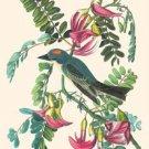 Gray Kingbird - 16x24 Giclee Fine Art Print Framed In Black (20x30 Finished)