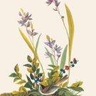 Field Sparrow - 16x24 Giclee Fine Art Print