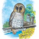Barred Owl - Paper Poster (18.75 X 28.5)