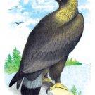 Golden Eagle, Ring-Tailed Eagle - 12x18 Framed Print In Black Frame (17x23 Finished)