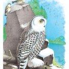 Snow Owl - 12x18 Framed Print In Black Frame (17x23 Finished)