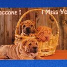 VINTAGE BEAUTIFUL SHAR PEI DOGS POSTCARD DOGGONE I MISS YOU CUTE DOGS IN BASKET