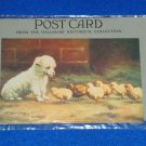 VINTAGE HALLMARK HISTORICAL COLLECTION POSTCARD CHICKS LAMB *ORIGINAL WRAPPING*