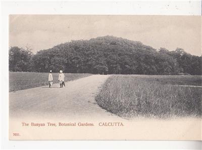 CN07.Vintage Undivided Postcard. The Banyan Tree,Botanical Gardens. India.