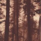 CJ52.Vintage French Postcard. The Forest around Luchon, Superbagneres.France