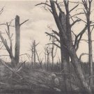 CI05.Vintage Postcard.The Priest Forest, called the Dead or Widow Forest. WW1