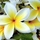 Natural Plumeria Scented Soy & Shea Butter Body Lotion 16 Oz