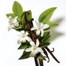 Natural Vanilla Blossom Soy & Shea Butter Body Lotion 16 Oz
