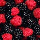 All Natural Blackberry Raspberry Scented Shampoo 2 Oz