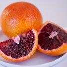 All Natural Blood Orange Scented Shampoo 2 Oz