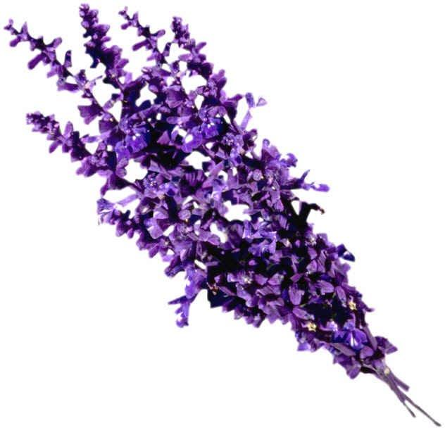 All Natural Lavender Scented Shampoo 16 Oz