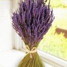 All Natural Lavender Almond Scented Shampoo 2 Oz