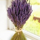 All Natural Lavender Almond Scented Shampoo 16 Oz