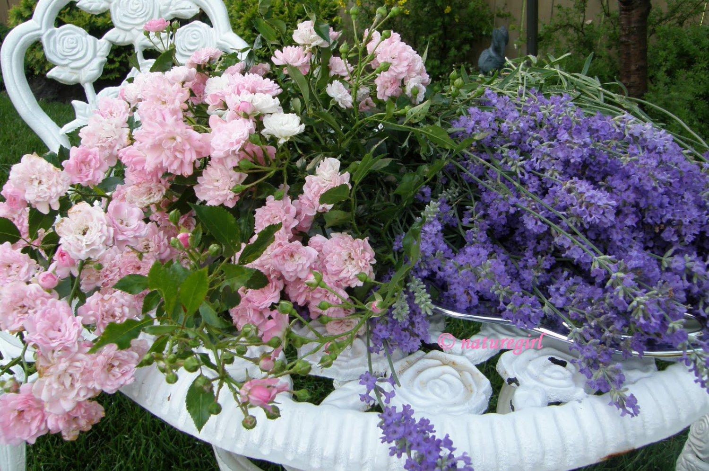 All Natural Lavender Rose Scented Shampoo 16 Oz