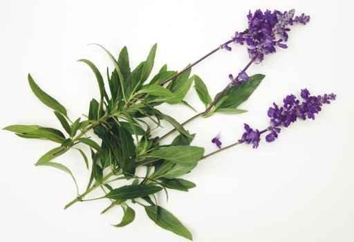 All Natural Lemongrass Sage Scented Shampoo 2 Oz