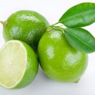 All Natural Lime Scented Shampoo 16 Oz