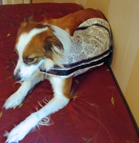 Pampered Pooch Dog Coat Black and White Toile