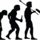 Evolution of Cricket