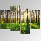 VISUAL STARSunlight in Forest Landscape Picture Print on Canvas for Home Decoration Ready to Hang