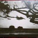 TWIN ROCKS, OREGON COAST-TILLAMOCK CO-VINTAGE RPPC REAL PHOTO POSTCARD-1922