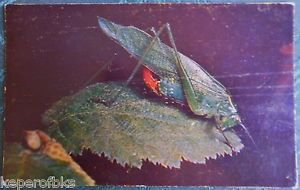 Insects Close Up-Book-Edward Ross Advertising Postcard  U of C Press Berkeley,CA
