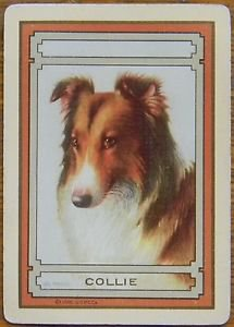 """COLLIE"" - DOG PORTRAIT -1 ANTIQUE USWN WIDE NAMED SWAP PLAYING CARD"