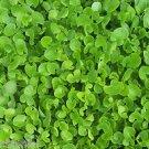 Ambrosial Gotu Kola Oil (Centella Asiatica) 100% Pure Organic Natural