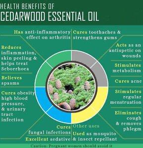 Ambrosial Cedarwood Essential Oil 100% Pure Organic Natural